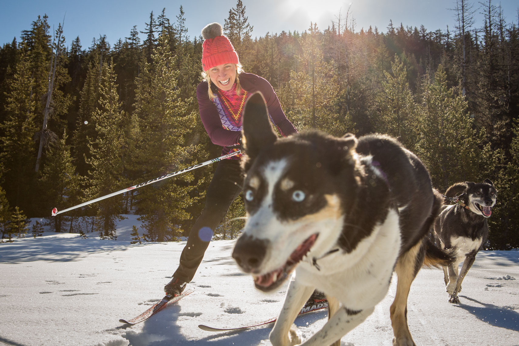 Skijoring in the Cascade Mountains