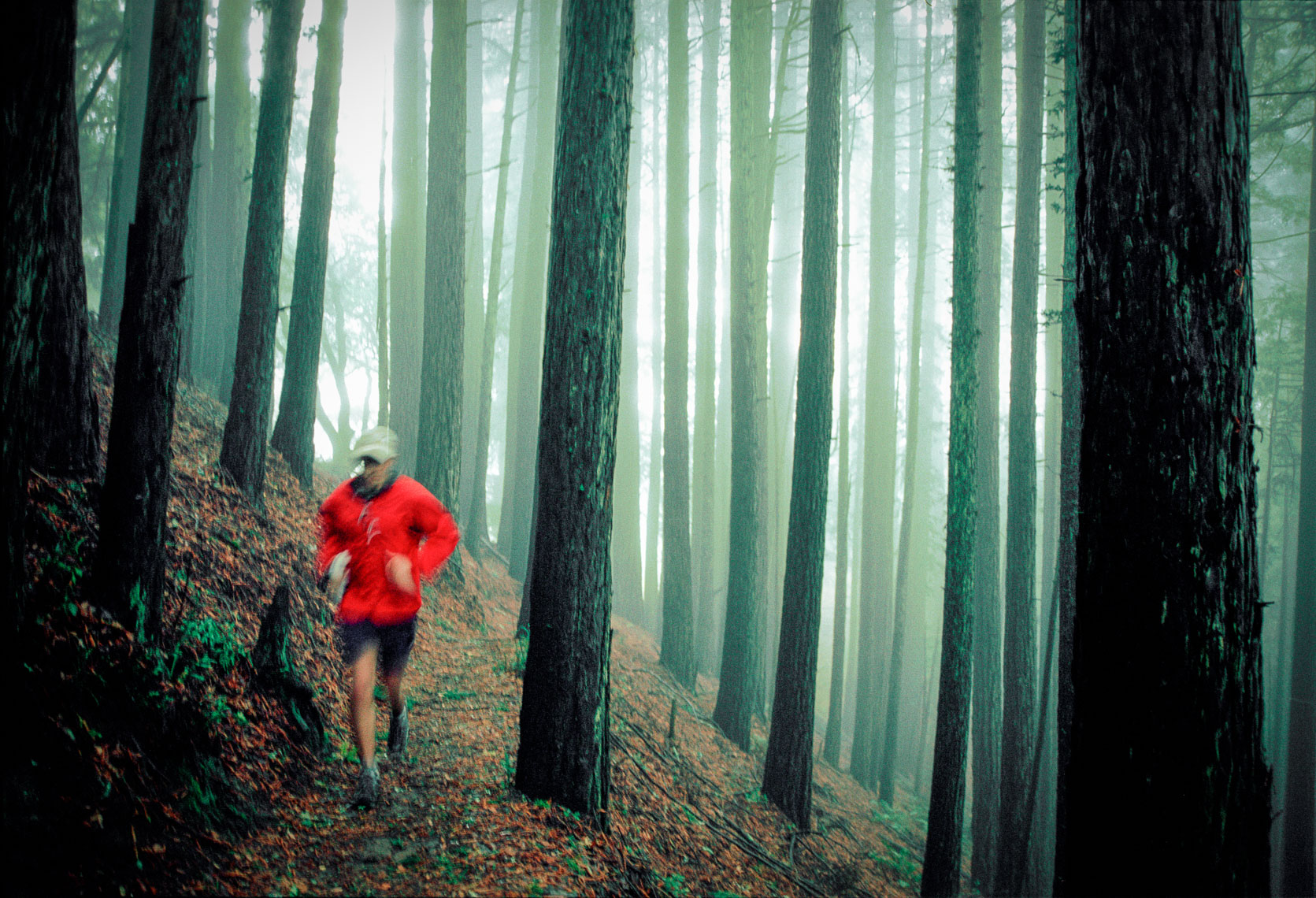 Foggy Trail Run on the Dipsea Trail in Northern California